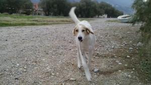 Amigo perruno en Grecia